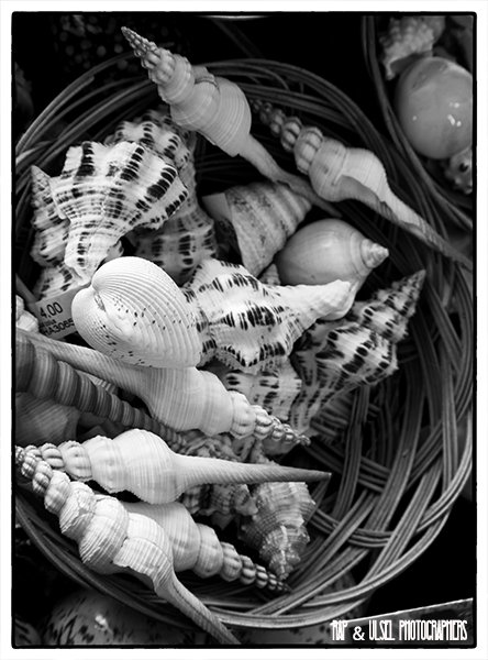 Caracolas de mar