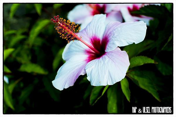 Una flor del desierto