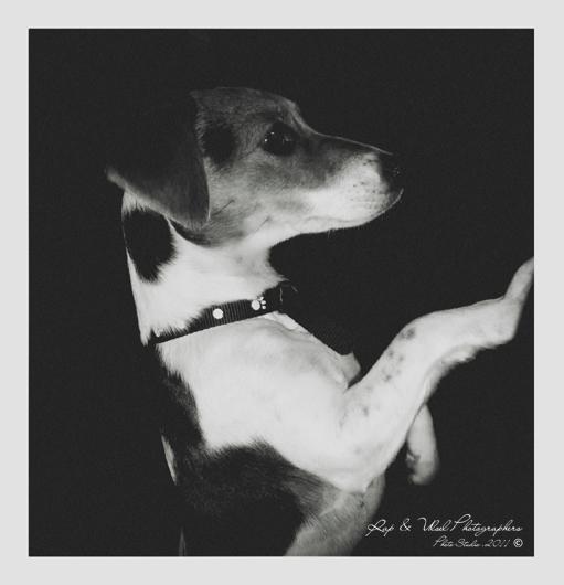 Don Pancho uno de los perros mas famosos.