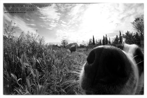 El perro curioso
